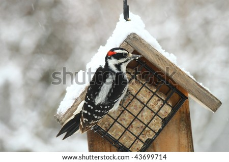 woodpecker eating at a feeder in a snowstorm