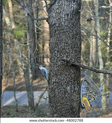 woodpecker on tree - stock photo