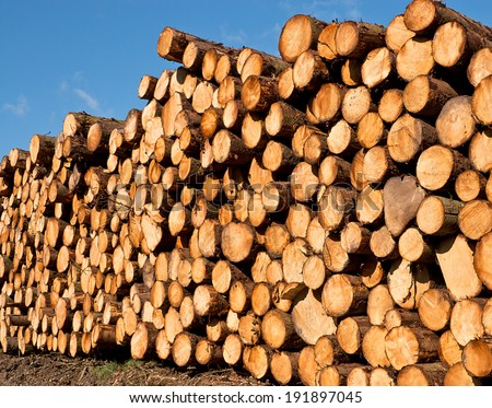woodpile of freshly cut lumber awaiting distribution after seasoning for the forestry industry - stock photo