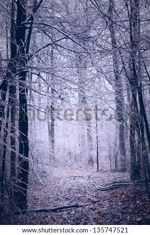 woods after an ice storm in canada with blue surreal tone - stock photo