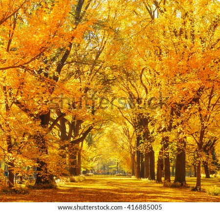 Woods and Autumn foliage in Central Park in midtown New York City - stock photo