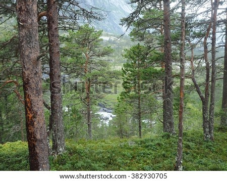 Woods in Norway - stock photo
