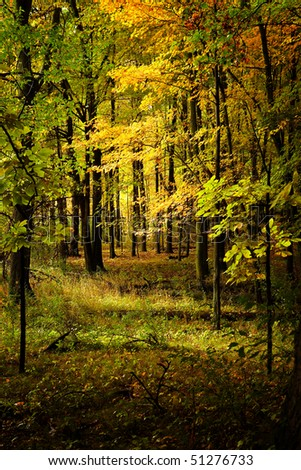 Woods in the fall - stock photo