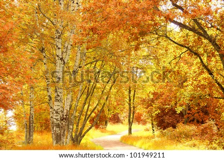 Woods Landscape Natural Background