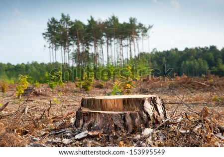 Woods logging and stump of deforestation hack wood in Poland. Group of last coniferous trees blurred behind, dried forest nature degradation, environment control. Horizontal orientation. nobody. - stock photo