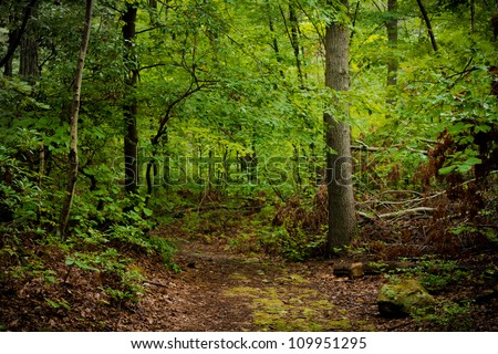 woods path - stock photo
