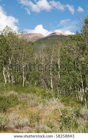 Woods Trail near Crested Butte