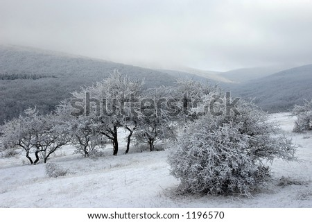 Woody hills covered with snow