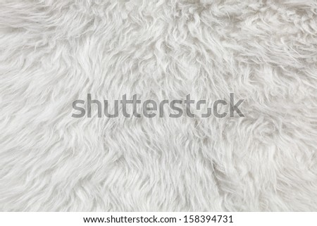 Wool background. Detail of sheep fur  - stock photo