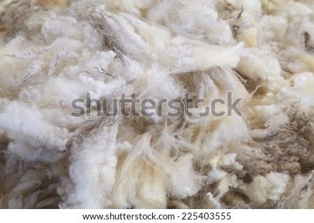 Wool of the Fleece from Sheep in farm. - stock photo