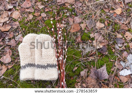 Wool women's mittens and flowering branches of willow on the background of colorful forest litter. The first days of March. The arrival of spring and end of winter - stock photo