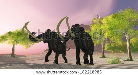 Woolly Mammoth Morning - A rosy morning finds two Woolly Mammoths searching for better vegetation to eat. - stock photo