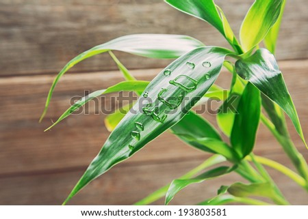 Word eco is written on green leaf of bamboo by water drops, ecology concept - stock photo