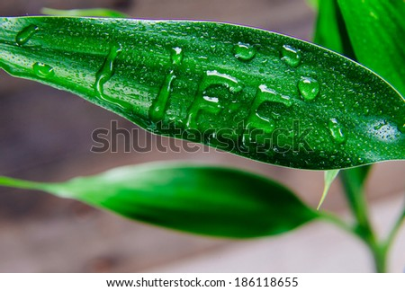 Word life is written on green leaf by water drops - stock photo