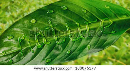 Word nature is written on green leaf by water drops, close-up - stock photo
