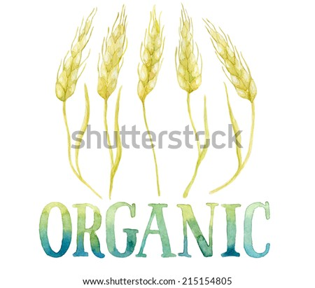 Word ORGANIC painted with green and blue watercolor framed by five ears of wheat. Real watercolor painting.  - stock photo