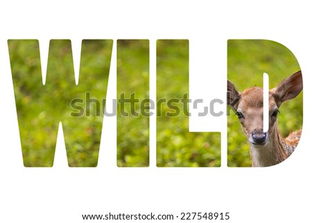 Word WILD Close-up fallow deer in wild nature - stock photo