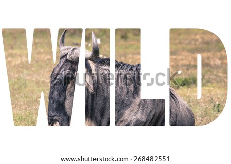 Word WILD over animals in nature. - stock photo