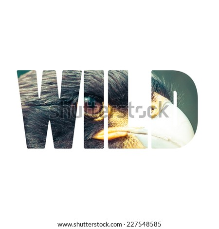 Word WILD over eagle head. - stock photo