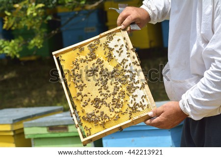 Work bees in hive Bees convert nectar into honey and close it in the honeycomb