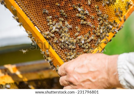 Work bees in hive Bees convert nectar into honey and close it in the honeycomb, and care for larvae - stock photo