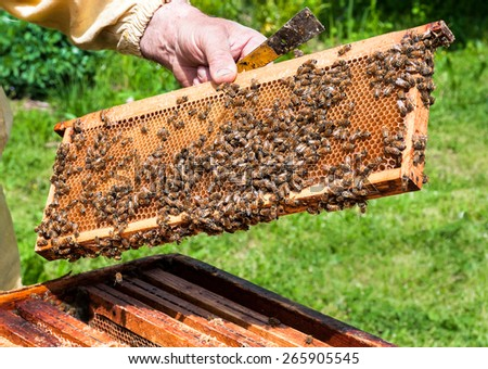 Worker bees in the hive - stock photo