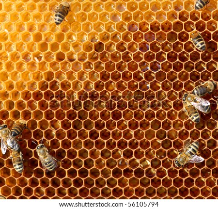 worker bees on honeycomb