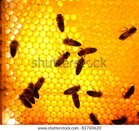 Worker bees on honeycomb - stock photo