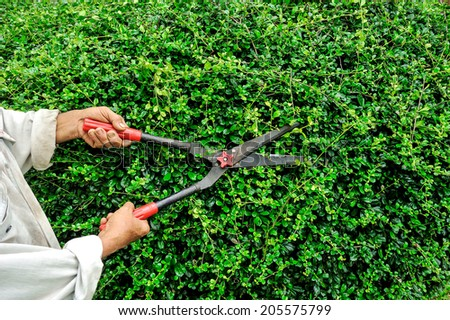 Worker cutting grass with grass shears in garden. - stock photo