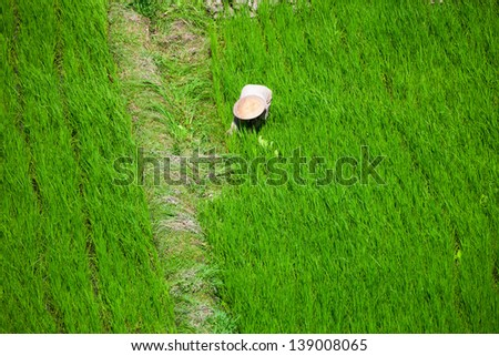Worker in a traditional hat in green rice field, Bali, Indonesia