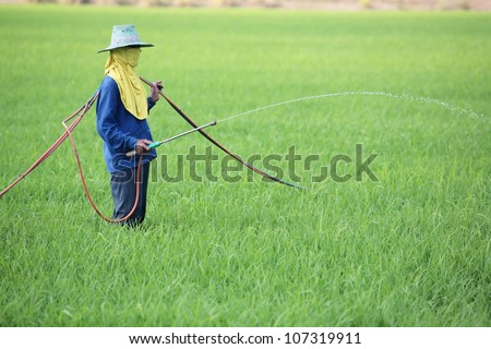 worker spraying pesticide in rice field. - stock photo