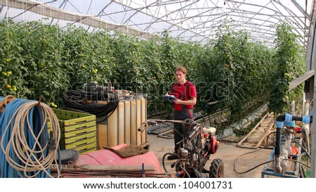 Worker writing on clipboard in greenhouse. Greenhouse produce. Food production. Tomato growing in greenhouse. - stock photo