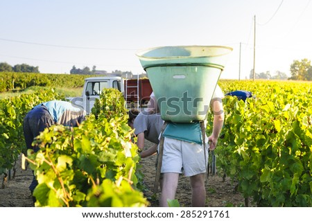 Workers in vineyards, France - stock photo