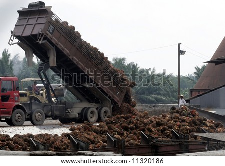 Workers unload oil palm fruits at a factory - stock photo