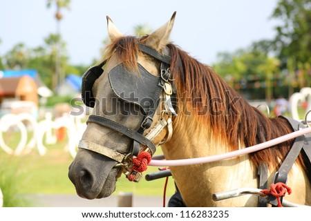 Workhorse - stock photo
