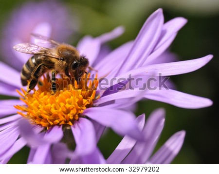 Working Bee on a Flower