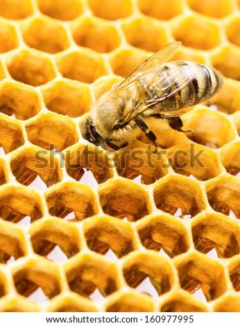 Working bee on honeycomb - stock photo