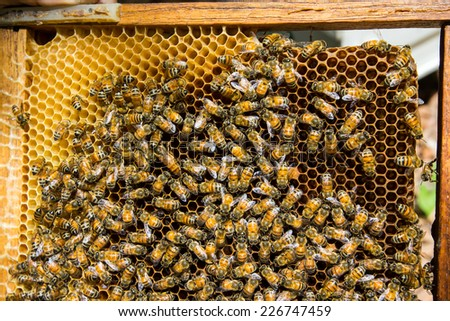Working bee on honeycomb in Thailand - stock photo