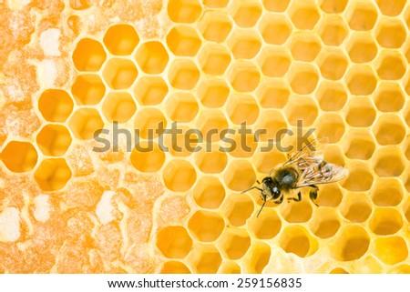 Working bee on wax honeycomb - stock photo