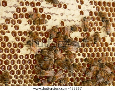 Working bees - stock photo