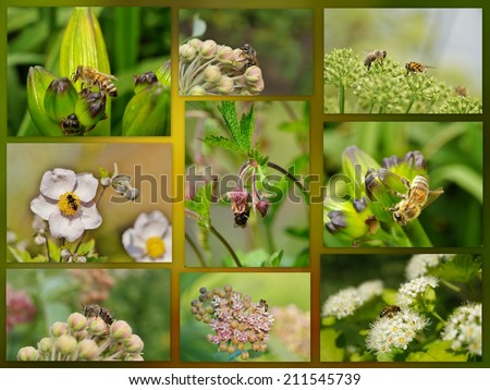 working bees on a flower - botanical garden  - photo collage