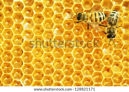 Working bees on honey cells. - stock photo