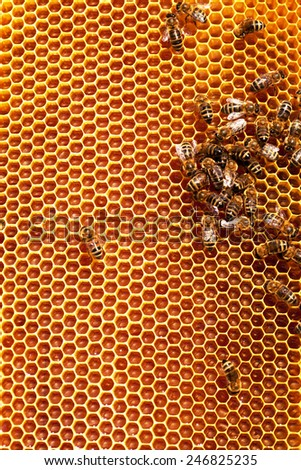 Working bees on honeycombs filled with honey - stock photo