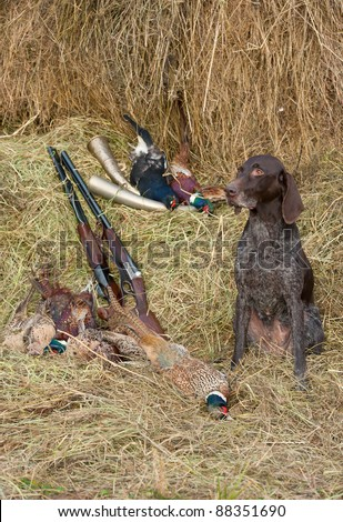 Working dog resting after the hunt beside a shotguns and pheasants in front of a hay, vertical