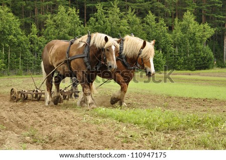 Working horse in a farm field - stock photo