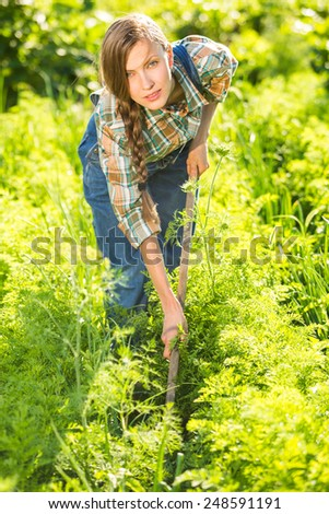 Working in vegetables garden - beautiful gardener taking care of her carrot rows. backlight - stock photo