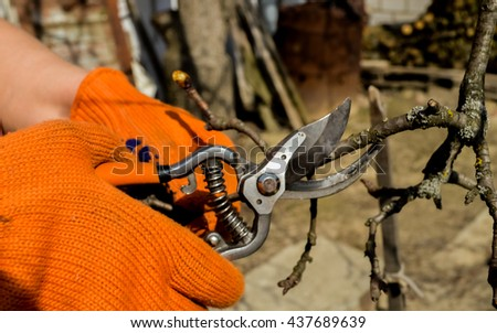 Working with cutting bush clippers in spring, pruning branch with secateurs. Early spring works.