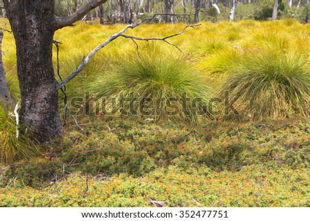 World heritage cradle mountain button grass plains - stock photo