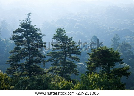 World Heritage Nara City'S Mt. Kasugaya Virgin Forest