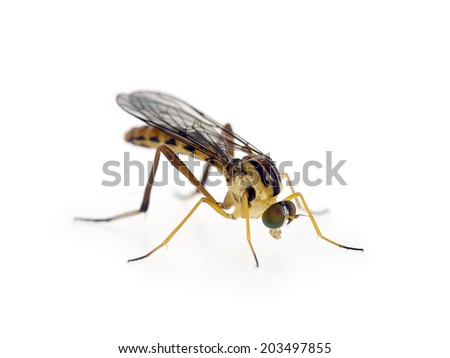 Wormlion fly. Most commonly found in Africa, Spain, but this one in Italy. Interesting evolution.